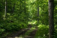 Τραχύς δρόμος μέσω του δάσους στοκ φωτογραφία με δικαίωμα ελεύθερης χρήσης