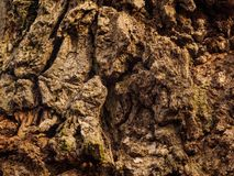 Τραχύς φλοιός ενός παλαιού δρύινου δέντρου στοκ φωτογραφία με δικαίωμα ελεύθερης χρήσης