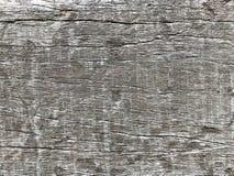 τραχύς Στοκ φωτογραφία με δικαίωμα ελεύθερης χρήσης