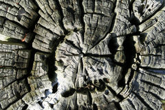 τραχύ δάσος Στοκ Εικόνες