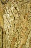 τραχύ δέντρο σύστασης φλο&iot στοκ φωτογραφίες με δικαίωμα ελεύθερης χρήσης