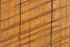 τραχύ κατασκευασμένο δάσ Στοκ Εικόνα