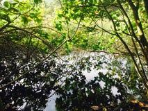 Τραχύ τροπικό ίχνος ζουγκλών κάτω στην κοιλάδα Waipi'o στο μεγάλο νησί της Χαβάης Στοκ Εικόνες