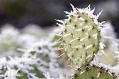 τραχύ χιόνι αχλαδιών Στοκ Εικόνες