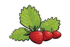 Τρεις άγριες φράουλες Στοκ Εικόνα