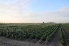 Τρεις ανεμόμυλοι σε μια σειρά για να κρατήσουν te Driemanpolder ξεραίνουν σε Stompwijk, Leidschendam οι Κάτω Χώρες Στοκ Φωτογραφία