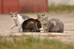 Τρεις γάτες που κοιτάζουν στη κάμερα και τη μια που παίρνουν έτοιμες να φύγει Στοκ Εικόνες