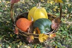 Τρεις κολοκύθες στο ψάθινο καλάθι, την κίτρινη κολοκύθα μακαρονιών, την πράσινη muscat κολοκύθα και την πορτοκαλιά κολοκύθα του H Στοκ Εικόνα