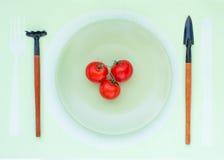 Τρεις ντομάτες βρίσκονται σε ένα πιάτο στοκ εικόνα με δικαίωμα ελεύθερης χρήσης