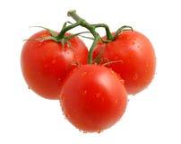 τρεις ντομάτες Στοκ Εικόνες
