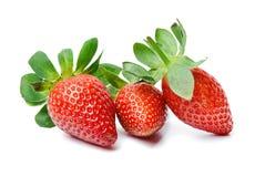 Τρεις ορεκτικές juicy φράουλες σε ένα απομονωμένο άσπρο υπόβαθρο Φωτεινά διαποτισμένα χρώματα Κινηματογράφηση σε πρώτο πλάνο στοκ εικόνες