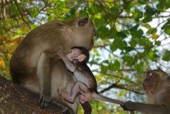 Τρεις πίθηκοι Στοκ εικόνες με δικαίωμα ελεύθερης χρήσης