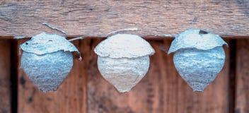 Τρεις παλαιές μικρές φωλιές σφηκών στοκ εικόνες