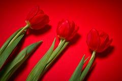 Τρεις τουλίπες σε ένα κόκκινο υπόβαθρο Στοκ εικόνες με δικαίωμα ελεύθερης χρήσης