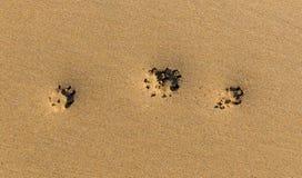 Τρεις τυπωμένες ύλες ποδιών στην άμμο σε μια παραλία Στοκ φωτογραφίες με δικαίωμα ελεύθερης χρήσης