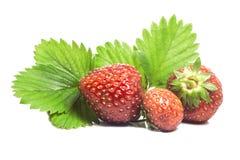Τρεις juicy ώριμες φράουλες από τον κήπο με τα πράσινα φύλλα Στοκ Εικόνες