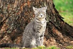 Τρελλό γατάκι Στοκ Φωτογραφία