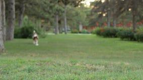 Τρεξίματα τραχύς-κόλλεϊ απόθεμα βίντεο