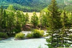 Τρεξίματα Chuja ποταμών βουνών μεταξύ του κωνοφόρων δάσους και των λιβαδιών στοκ φωτογραφία με δικαίωμα ελεύθερης χρήσης