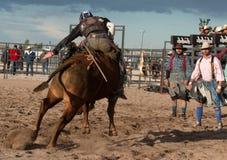Τρελλή οδήγηση του Bull ροντέο του Bull επαγγελματική Στοκ Εικόνες