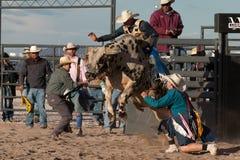 Τρελλή οδήγηση του Bull ροντέο του Bull επαγγελματική Στοκ Φωτογραφίες