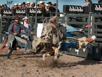Τρελλή οδήγηση του Bull ροντέο του Bull επαγγελματική Στοκ Φωτογραφία