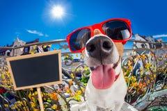 Τρελλό ανόητο άλαλο βλέμμα σκυλιών fisheye Στοκ εικόνες με δικαίωμα ελεύθερης χρήσης