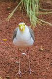Τρελλό πουλί Στοκ Φωτογραφίες