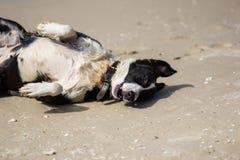 Τρελλό σκυλί Στοκ Εικόνα