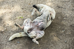 Τρελλό σκυλί Στοκ Φωτογραφία