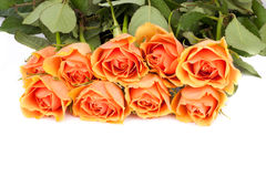 τριαντάφυλλα ανασκόπησης στοκ φωτογραφίες