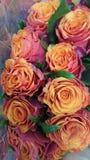 Τριαντάφυλλα βαλεντίνων στη ροζ κρέμα Στοκ Εικόνα