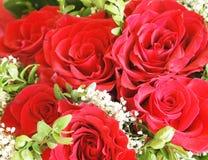 τριαντάφυλλα δεσμών Στοκ φωτογραφία με δικαίωμα ελεύθερης χρήσης