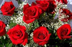 τριαντάφυλλα δεσμών Στοκ Φωτογραφίες