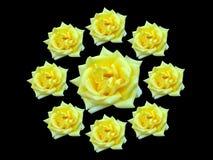τριαντάφυλλα δεσμών Στοκ Φωτογραφία