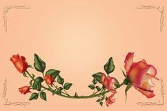 τριαντάφυλλα εσείς απεικόνιση αποθεμάτων