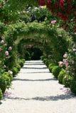 τριαντάφυλλα κήπων αψίδων στοκ εικόνες