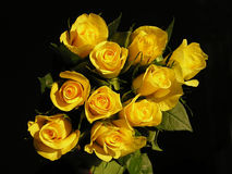 τριαντάφυλλα κίτρινα στοκ φωτογραφία