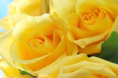 τριαντάφυλλα κίτρινα Στοκ φωτογραφία με δικαίωμα ελεύθερης χρήσης