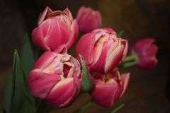 Τριαντάφυλλα και μια όμορφη άποψη της ζωής στοκ φωτογραφίες