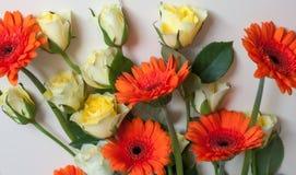 Τριαντάφυλλα και gerberas στοκ φωτογραφίες