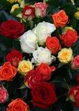 τριαντάφυλλα μερών Στοκ Εικόνες