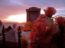 τριαντάφυλλα νεκροταφ&epsilon Στοκ Φωτογραφία