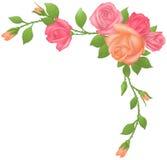 τριαντάφυλλα πλαισίων διανυσματική απεικόνιση