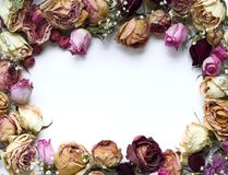τριαντάφυλλα πλαισίων Στοκ Εικόνες