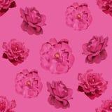 τριαντάφυλλα προτύπων άνε&upsi Στοκ Εικόνες