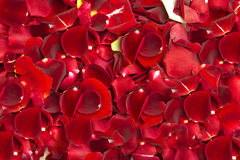 τριαντάφυλλα προτύπων Στοκ φωτογραφία με δικαίωμα ελεύθερης χρήσης