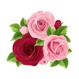 Τριαντάφυλλα ροζ και burgundy επίσης corel σύρετε το διάνυσμα απεικόνισης διανυσματική απεικόνιση
