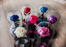 Τριαντάφυλλα σε μια φιάλη κάτω από το γυαλί Σαν δώρο για τις διακοπές στοκ εικόνες