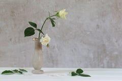 Τριαντάφυλλα στο βάζο στο παλαιό άσπρο υπόβαθρο Στοκ Φωτογραφίες